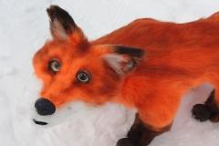 Fuchs-Fipsi-12