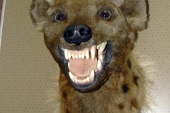 Hyäne-fertig-04