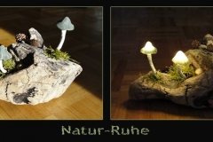Pilz-Licht-Naturruhe-final