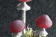 Pilzlicht-Grosse-Wurzel-04