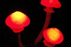 Pilzlicht-Witchwood-03